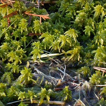 what plants like peat moss